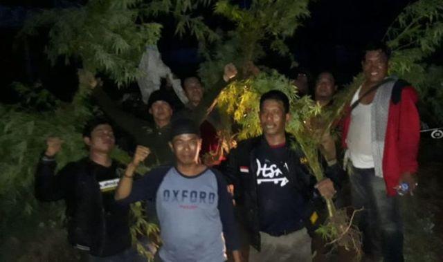 TNI Temukan 1 Hektar Ladang Ganja Di Empat Lawang